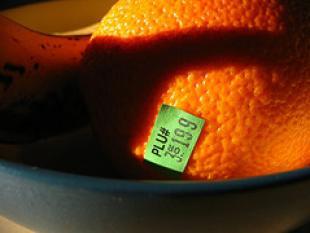 Biobrandstof maakt eten véél duurder