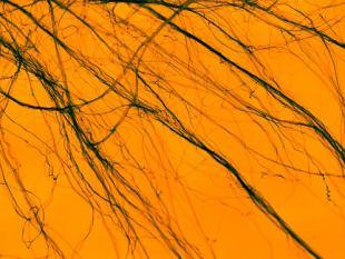 Is nanotech wel veilig?