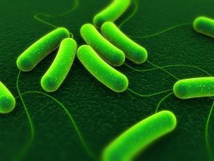 Vieze bacteriën bron van schone energie