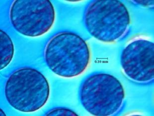 Nova 600: ogen en handen op nanoschaal