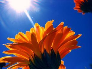 Onstuimige groei zonne-energiebranche