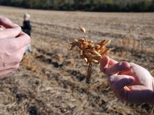 Biobrandstoffen: drama of drager voor de nieuwe, nieuwe economie
