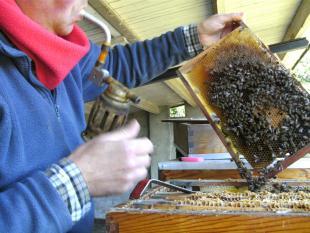 Wetenschap in de ban van geheimzinnige bijenverdwijnziekte