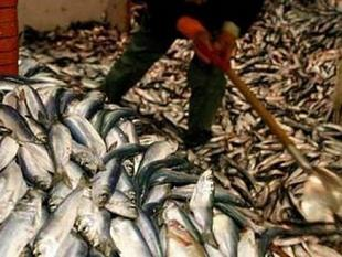 De lekkerste vis is groene vis
