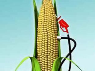 Nieuwe vinding zet biobrandstof weer op de kaart