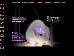 Hersencellen de baas met licht