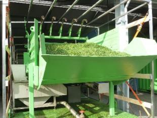 Wat maak je van gras? Vezelkoek, grasmelk, zelfs kunststof
