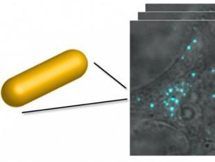 Goudstaafjes wijzen de weg in levende cel
