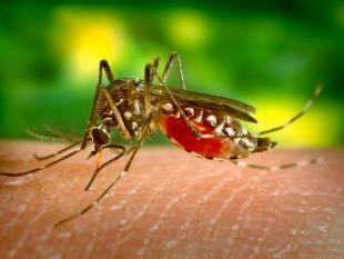 Bacteriën op je huid blijken muggenlokkers