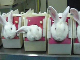 """Proefdiervrij houdt eindelijk op met """"zielige konijntjes"""""""