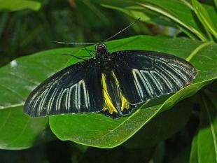 Vlindervleugels wekken groene energie op