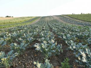 Agrarische sector 2.0