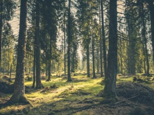 Eerste platform voor duurzaam, lokaal geproduceerde houtproducten