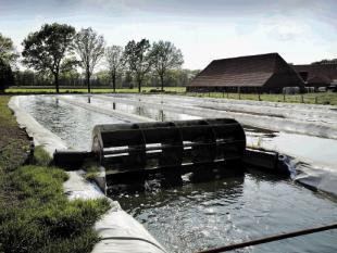 Nederlandse alg zorgt voor voedsel en biobrandstof