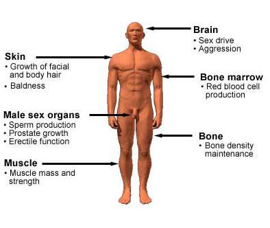 Male Testosteron 37