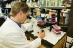 onderzoek met stamcellen