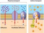 transport door het membraam kan maar op 3 manieren