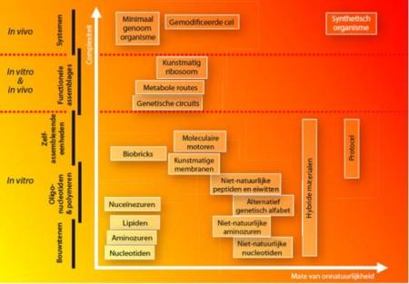 Synthetische biologie speelt zich af opdiverse niveaus, variërend van het moleculaire niveau tot geheel gemodifi ceerdecellen en uiteindelijk tot geheel nieuwe, synthetische organismen.