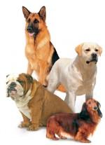 Honden met speciale eigenschappen