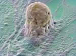 Uitvergroting van een stamcel