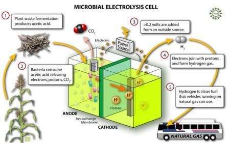 Werking van de microbial elektrolysis cell